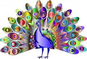 Libra peacock